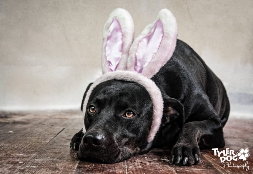 Happy Easter from Maggie Monster!